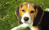 Apps para amantes de las mascotas