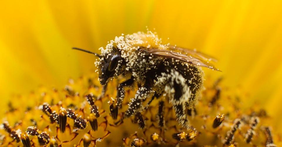 Google permitirá consultar el polen en el aire gracias a nuestro smartphone
