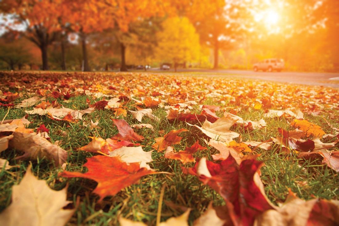 Tres trucos para sacar fotos en otoño con tu móvil