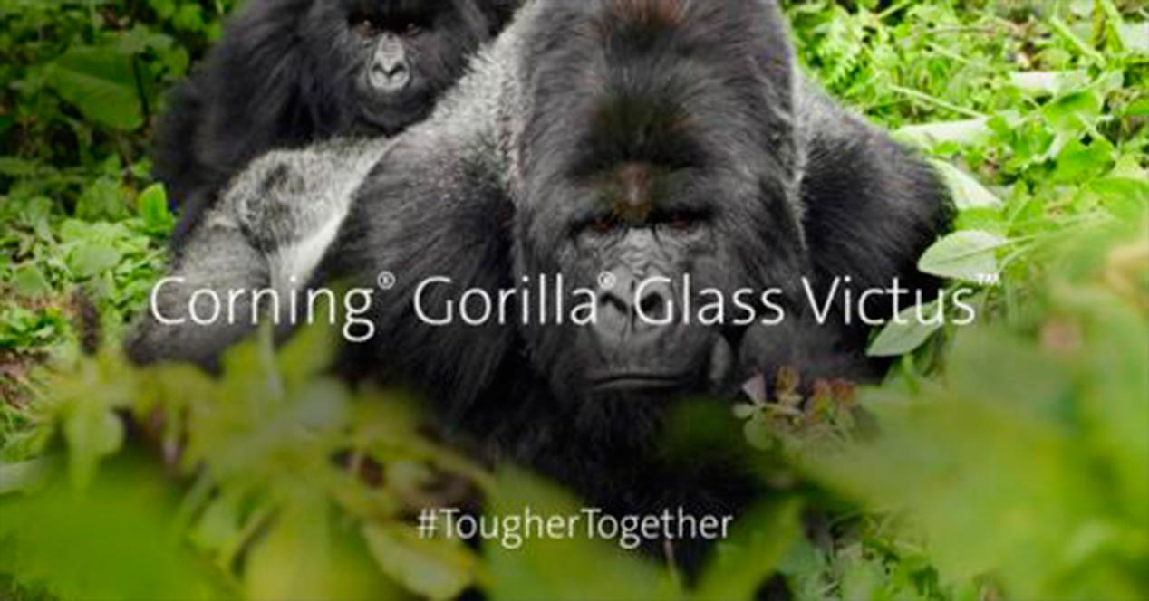 Gorila Glass